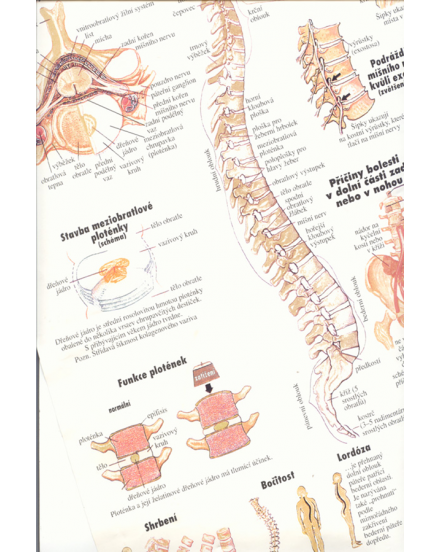 Poruchy chrbtice